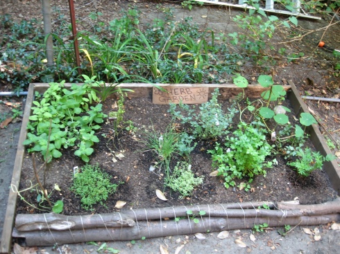 herb garden July 2009